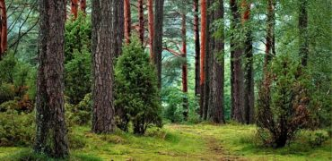 maamüümine.ee | metsa- ja põllumaa müük