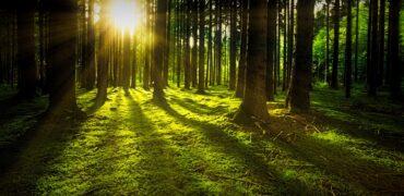 metsamaa müümine | Metsa müük