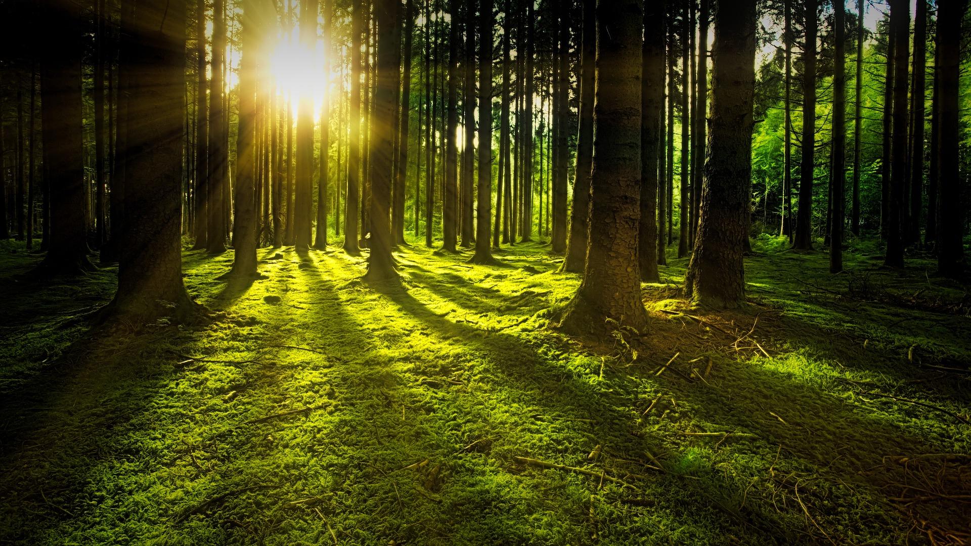 metsa- ja põllumaa ostmine | metsa- ja põllumaa müümine | usaldusväärne | kõrge hind
