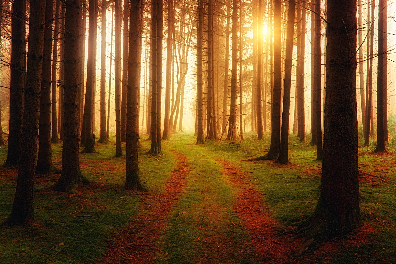 Metsamaa | metsa müük | metsamaa müük | metsa ostmine | metsamaa ostmine | raieõigus