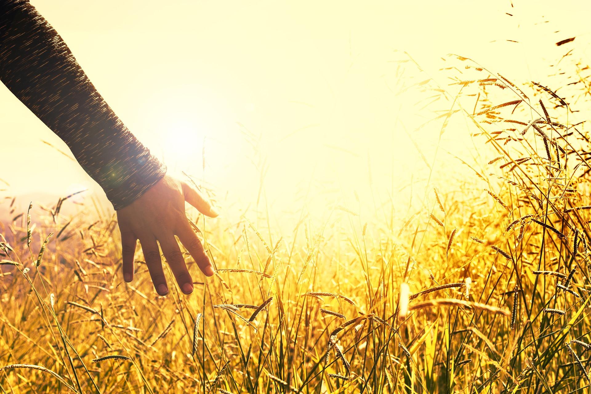 Põllumaa | põllu müük | põllumaa müük, põllumaa ostmine | põllu ostmine |