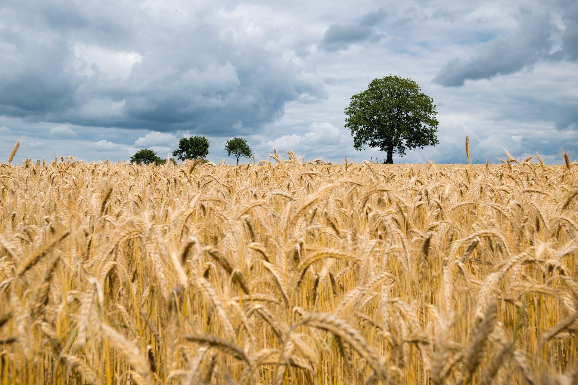 põllumaa müümine   põllumaa müük